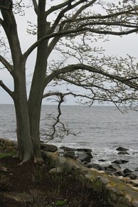 View from Shore Road, Magnolica, MA By John Phelan (Own work) [CC-BY-3.0 (http://creativecommons.org/licenses/by/3.0)], via Wikimedia Commons