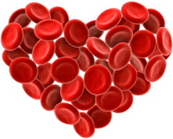 Heart shape made up of red blood cells