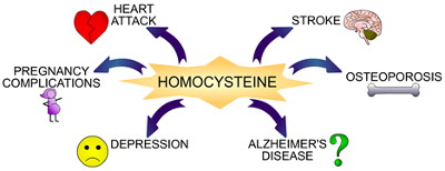 Homocysteine Wiley 400