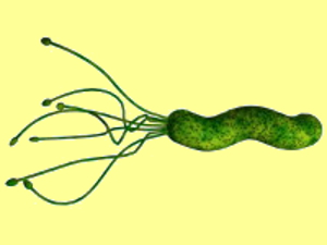h.pylori and Diarrhea