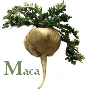 Maca root with leaves