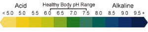 pH in relation to B12 and Health
