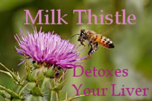 photo: Milk Thistle Flower and Bee - Text: Milk Thistle Detoxes Your Liver