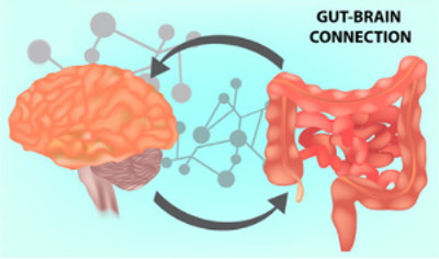 Gut - Brain Connection